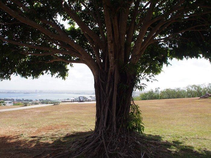 アプガン砦友好の樹