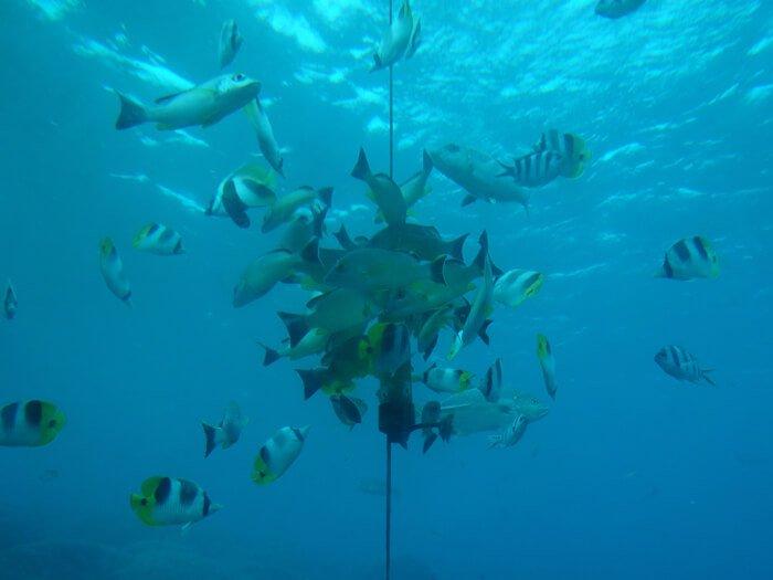 フィッシュアイ マリンパークの魚