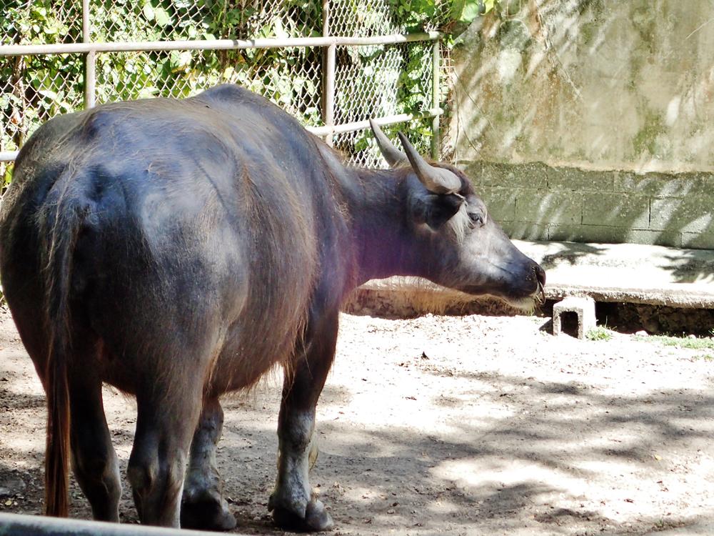 グアム動物園